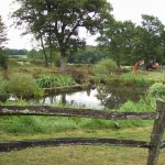 Pond Construction in East Grinstead