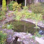 pond design, Garden Ponds Pagan Plant