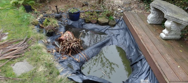 pond design pond Garden Ponds - Pagan Plant